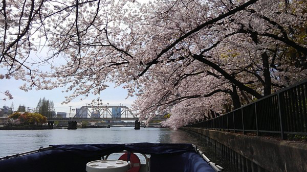 インディ号で桜クルーズ